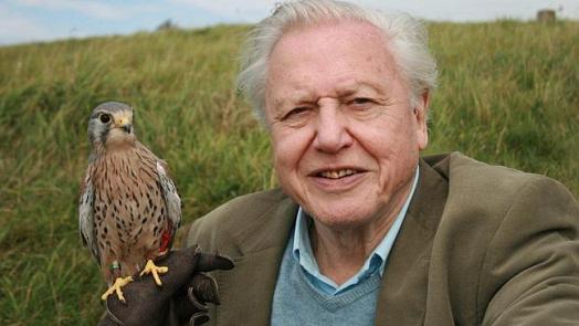 David-Attenborough-001