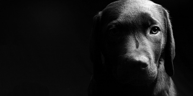 black-and-white-dog-wallpaper-hd-resolution-Is-Cool-Wallpapers