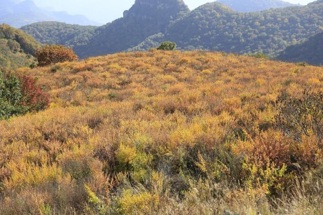 yellow-grass-beam-976302_960_720